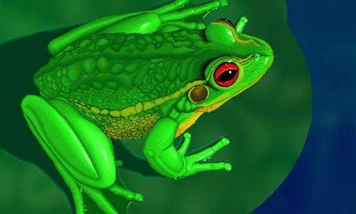 蛙的血细胞手绘图