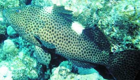 壁纸 动物 海底 海底世界 海洋馆 水族馆 鱼 鱼类 449_256
