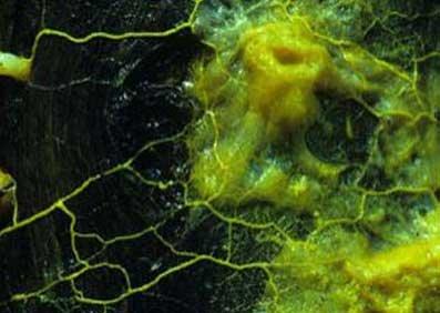 英国科学家用单细胞动物打造生物机器人