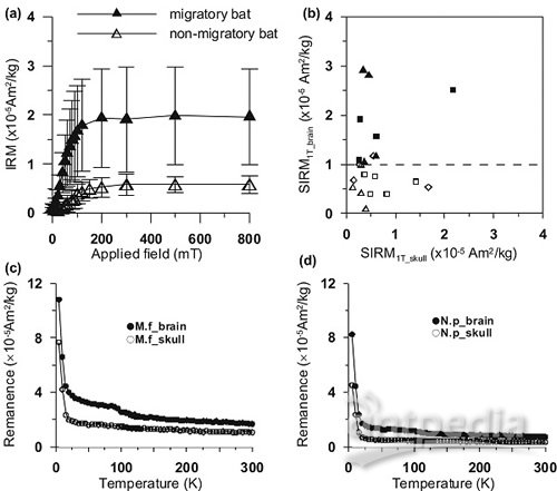 sirm��X�V��n���v��n�_bat head contains soft magnetic particles: evidence from