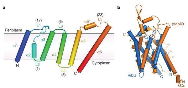 膜蛋白提取步骤