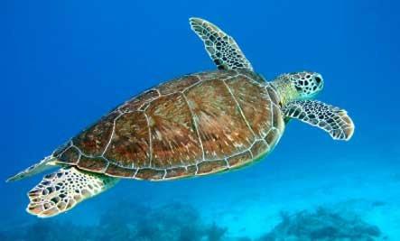 世界六大濒危生物栖息地