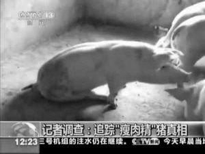 """""""双汇""""被曝使用含""""瘦肉精""""猪肉(组图)"""