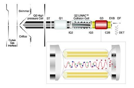 电喷雾质谱在蛋白质组学
