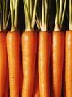 类胡萝卜素系