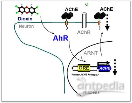 液体细胞毒理实验步骤