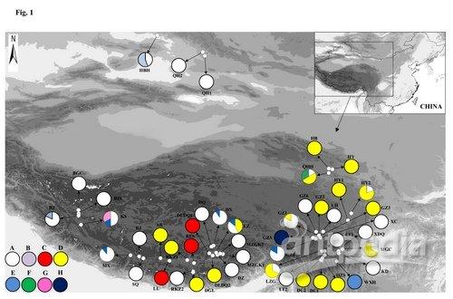 武汉植物园在青藏高原水生植物谱系地理学研究中获进展图片