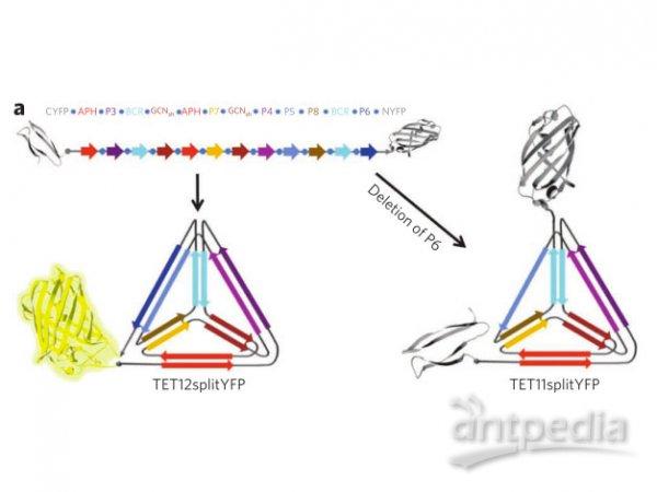 蛋白质|三维结构