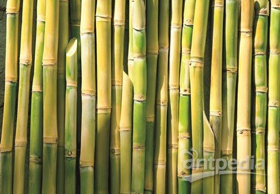 采购该公司生产的以甘蔗为原料的生物质低密度聚乙烯