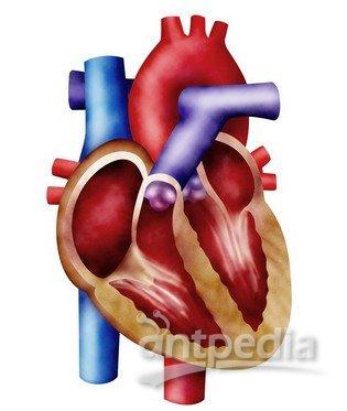 干细胞修复受损心脏遭质疑图片