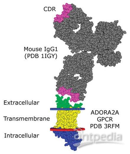 动物细胞结构图立体