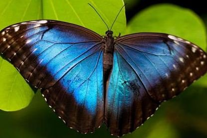 蝴蝶翅膀+碳纳米管=新型生物复合材料