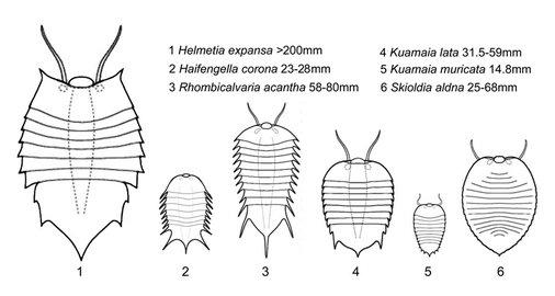 南京古生物所澄江生物群节肢动物研究取得新成果