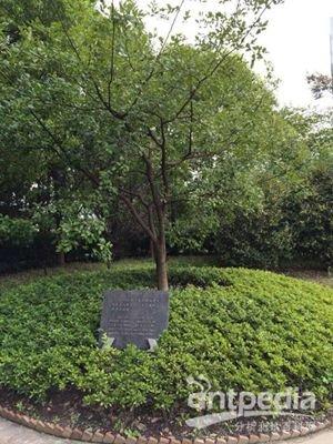 m. (skip) kingston教授与牛顿的苹果树