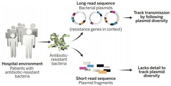 根据世界卫生组织(WHO)报道,抗抑菌剂基因的出现对于由细菌、寄生虫、病毒及真菌所引起的感染疾病的预防与治疗带来了很大的挑战,在后抗生素时代,看似普通的感染有可能扼杀一条生命不再是不切实际的幻想,而正逐渐变为现实。    通常抗抑菌剂基因的获得是由细菌内可动遗传因子元件介导的致病菌间或者是致病菌和共生体间交换的结果,因此,获得抗抑菌剂基因所处的遗传环境对于了解抗抑菌剂基因的移动就显得非常重要。通过PCR或高通量二代测序的方法可以很容易检测到抗抑菌剂基因的存在,然而这些方法自身的一些局限性使得其很