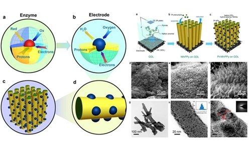燃料电池介微观尺度有序结构膜电极研究获进展