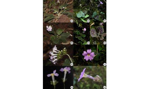 更新时间: 2018-10-09 21:29:11 花柱二型研究的热门新闻  华南植物图片