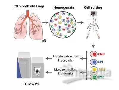 总结免疫细胞结构图