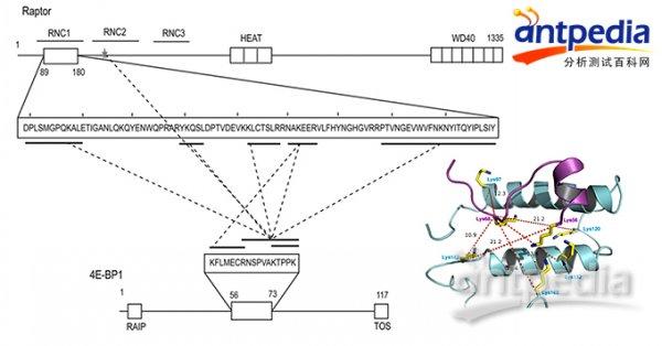 董梦秋:化学交联质谱让结构生物学研究如虎添翼