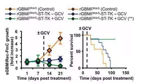 在肿瘤清除后消除工具细胞(图中绿色曲线)可以显著提升小鼠的生存率(约80%)。