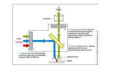 发荧光的原理是什么_荧光反应是什么颜色