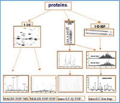 【北京蛋白质组研究中心生物质谱实验室】科研与服务