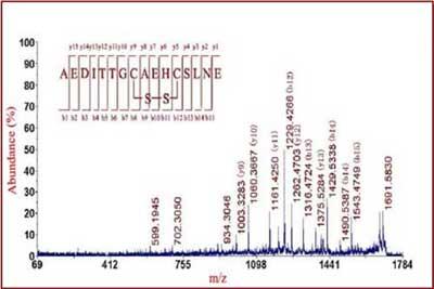 磷酸化蛋白荧光染料染色分析