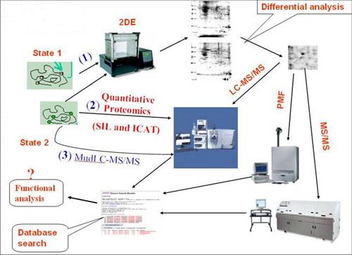 天冬氨酸磷酸化的化学蛋白质组学分析
