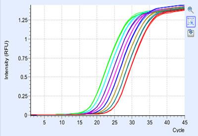 时荧光定量pcr仪