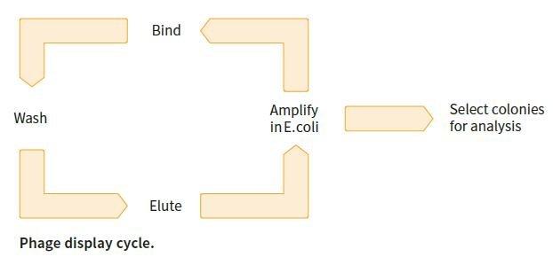 微生物筛选系统