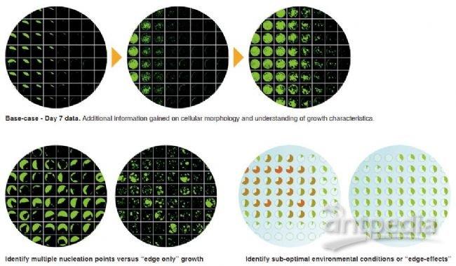 细胞生长分析