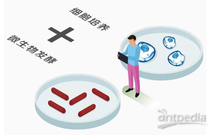 细胞培养与微生物发酵.JPG