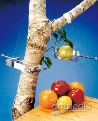 果实-树木茎干生长测量仪