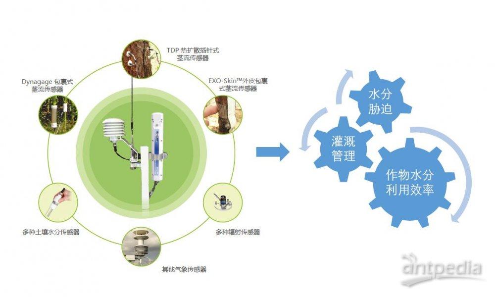 利用SapIP分布式植物生理生态监测系统能做哪些研究?